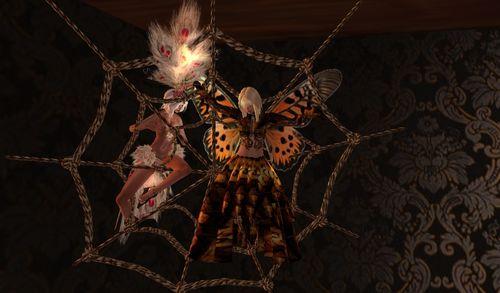 assaut de câlins d'une veuve noire à un papillon